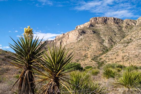 Rastlinje je za obiskovalca večinoma neprijazno. Foto: Peter Gedei